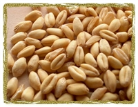 Organic Soft White Wheat (kernels)