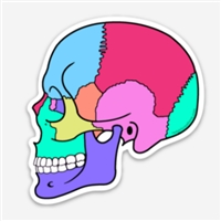 Textbook Anatomy Skull Decal