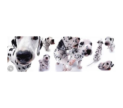 Cute Dalmation Puppy Dorm Poster