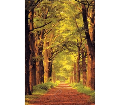 Awesome Summer Forest Path Poster