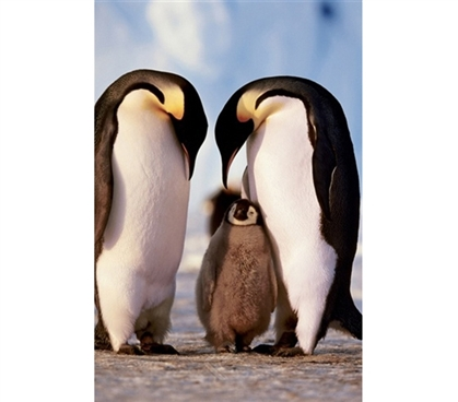 Penguin Family Poster- Cute, animal-inspired poster for dorm room wall
