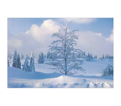 Decorate Your Dorm Room - Winter Landscape Poster - Brings A Cool Scene To your College Decor
