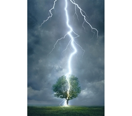 Powerful Lightning Striking Tree in Field Poster