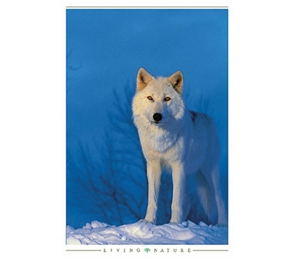 Freedom of White Wolf Poster