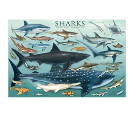 Ocean Full Of Sharks - Educational Wall Decor & College Poster Idea