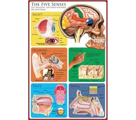 Cool Science Poster - The Five Senses Poster - Smart Poster For College Students