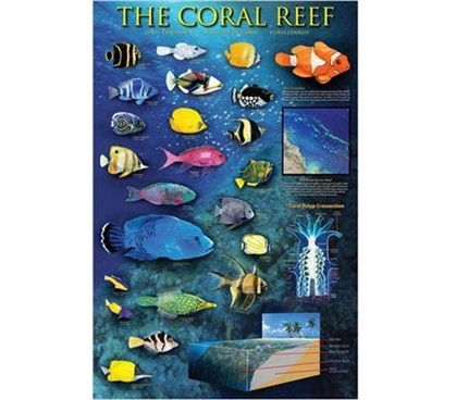 Identifying Coral Reefs in the World Poster Essential