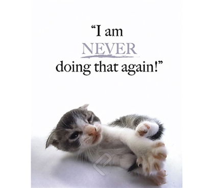 """I am Never Doing that Again!"" Kitten Dorm Poster super cute kitten stubs his toe in this dorm room poster"