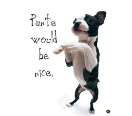 """Pants Would be Nice"" Dog College Poster adorable puppy dog stands on hind legs in easy dorm room size poster"