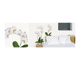Prance Through The White Orchid Of Dorm Decor  - Peel N Stick