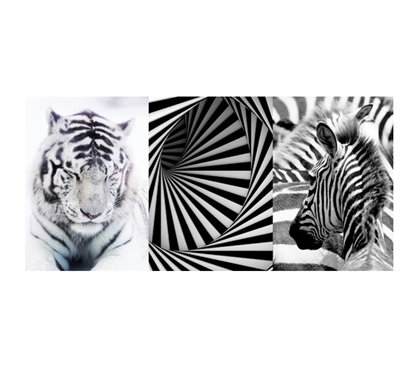 Black and White Designer Panoramic Wall Art - Peel N Stick - Cool Dorm Decor