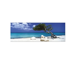 Divi Divi Tree Door Dorm Poster Dorm Essentials Must Have Dorm Items