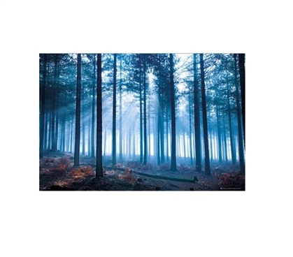 Tom Mackie Forest College Poster Dorm Wall Art Wall Decorations for Dorms