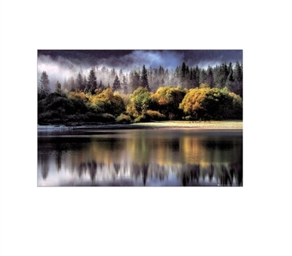Forest Lights College Poster Dorm Room Decorations Must Have Dorm Items
