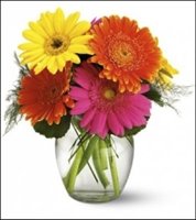 Eight Colorful Gerbra Daisies
