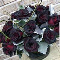 18 Black Magic Roses