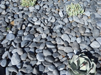 "Black Mexican Beach Pebbles La Paz 1/2"" - 1"""