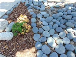 "Black Mexican Beach Pebbles La Paz 5"" to 10"""