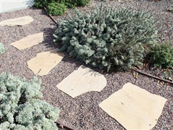 "Arizona Flagstone Buckskin Light 1-1/4"" Minus"