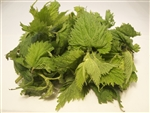 Stinging Nettles - Urtica Dioica