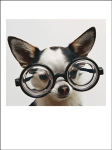 1157 BD Dog with oversized glasses