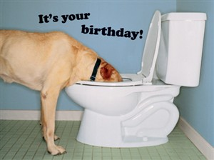 1218 BD Dog drinking from toilet