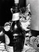 1231 BD Kitten with wine bottle
