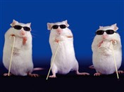 1251 BD Three blind mice