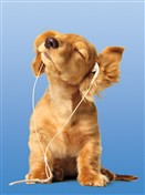 1277 BD Dog & iPod