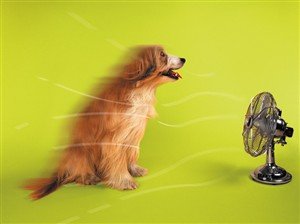 1284 BD Dog & fan