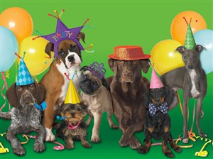 1293 BD Party dogs