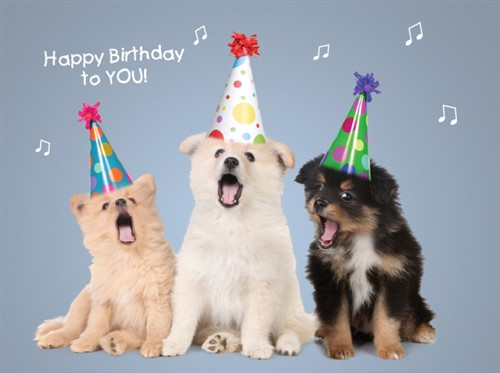 Birthday Ecards Dogs Singing ~ Bd dogs sing happy birthday