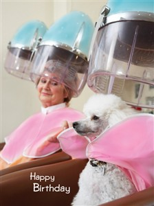 1377 BD Poodle in salon