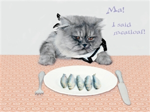 1389 BD Cat wants meatloaf
