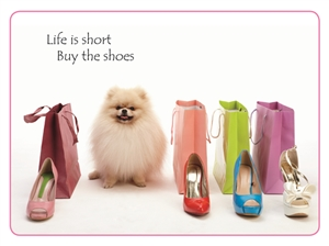 1405 BD Shoe shopping with dog