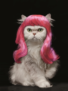 1417 BD Cat with pink wig