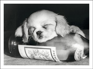 2125 BD Dog asleep on wine bottle