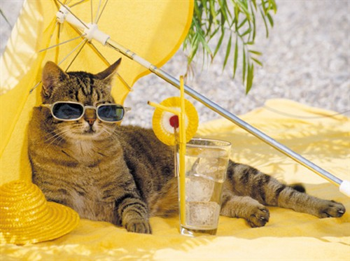Image result for beach cat