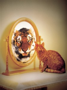 2171 BD Cat with tiger reflection