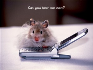 2917 BB Hamster w/ cell phone