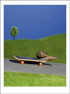 3115 CG Snail on skateboard