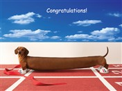 3129 CG Stretched out dachshund