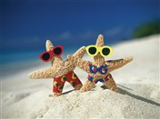 4113 AV Starfish couple