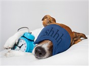 5137 GW Dog asleep with alarm clock