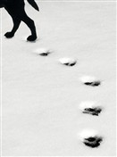 5517 PS Paw prints in snow