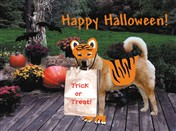 7121 HW Dog trick-o-treats as tiger