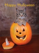7129 HW Cat in pumpkin