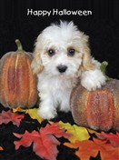 7131 HW Puppy, pumpkins, leaves