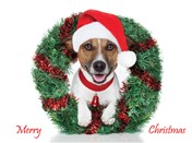 7561BX CH Dog with santa hat, wreath