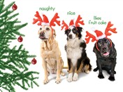 7562BX CH Three dogs as reindeers